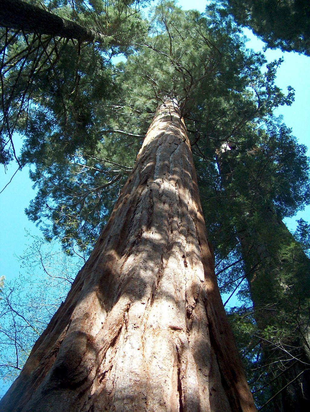 Where Rv Now Big Trees